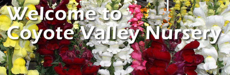 Welcome to images/mainNav/images/mainNav/Coyote Valley Nursery